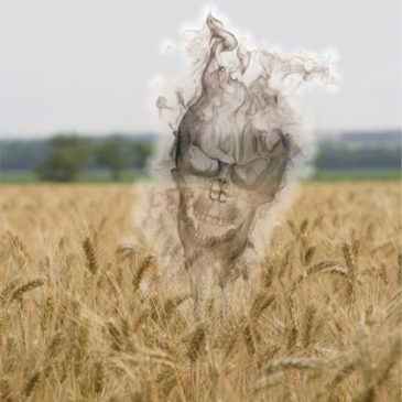 GM Wheat May Damage Human Genetics Permanently